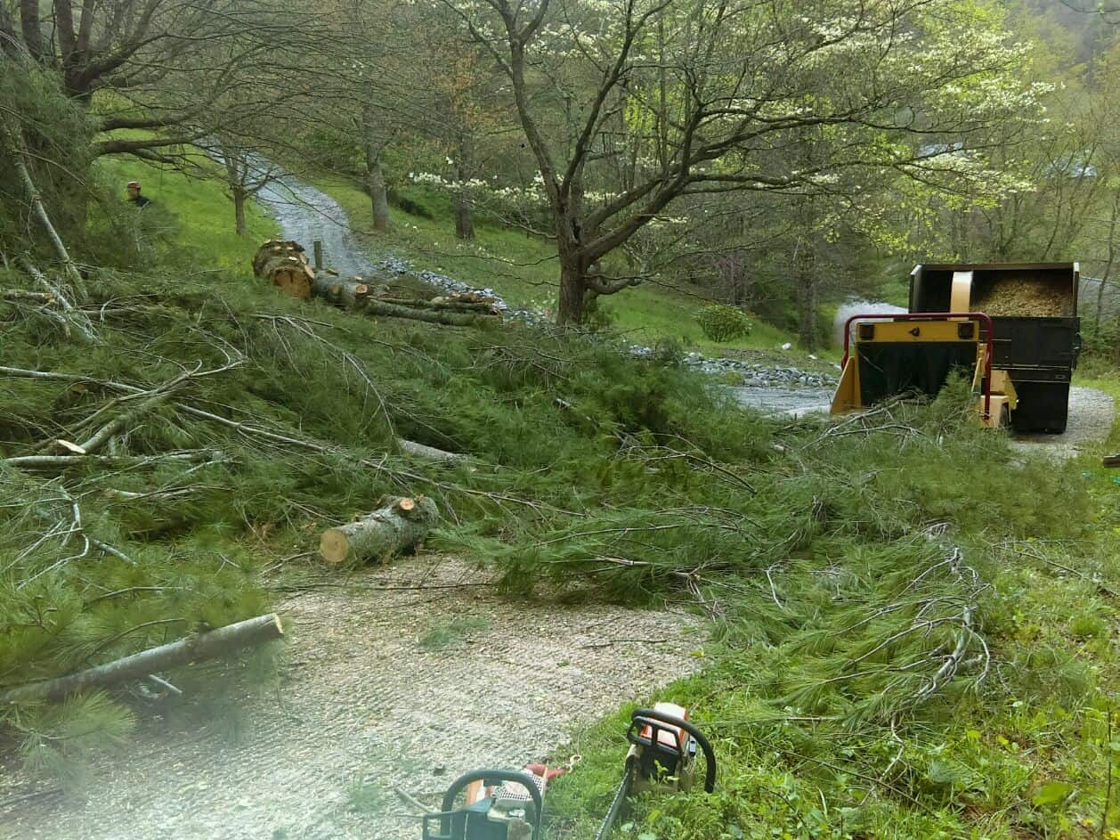 affordable tree service franklin nc